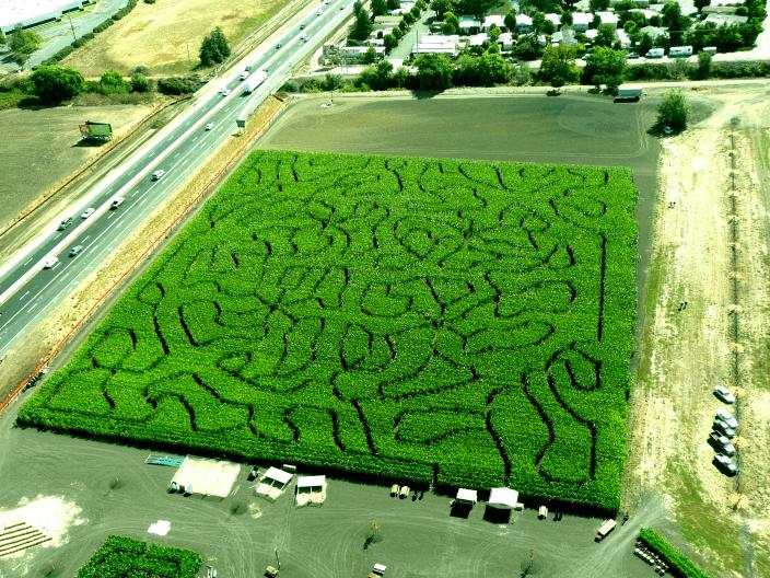 Petaluma Pumpkin Patch California