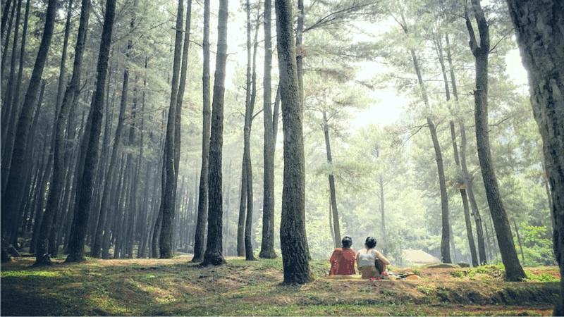 Wisata Alam Di Sentul Taman Wisata Alam Gunung Pancar